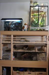 Der Zoo, Meerschweinchen, Geckos und das Aquarium