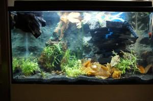 Gefülltes Aquarium - Mit Laub