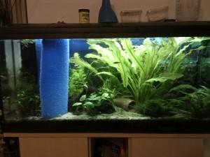 Abgetrenntes Aquarium