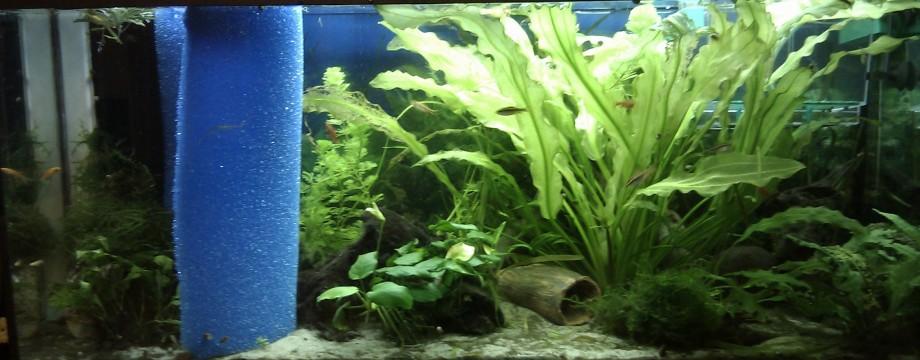 Erste Umgestaltung im neuen Aquarium